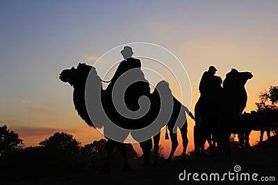 Camel caravan Editorial Photo