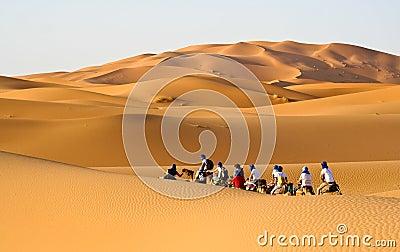 Camel caravan going through the sand dunes