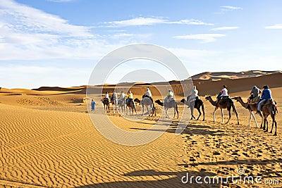 Camel caravan going through the sand dunes in the Sahara Desert, Editorial Photography