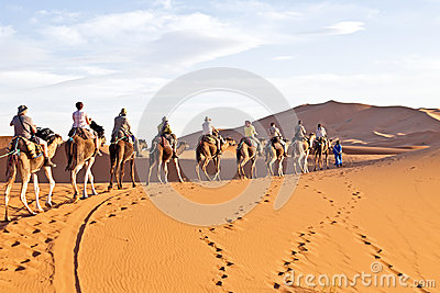 Camel caravan going through the sand dunes Editorial Stock Photo