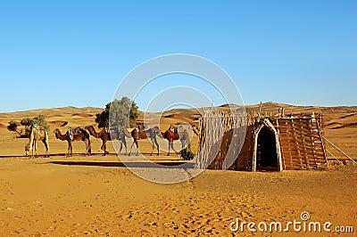 Camel caravan parking