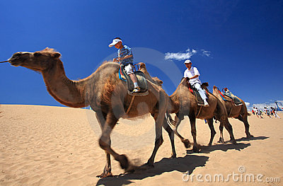 Camel Caravan in the Sha River Desert Editorial Photography
