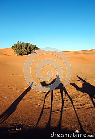 Camel caravan shadows