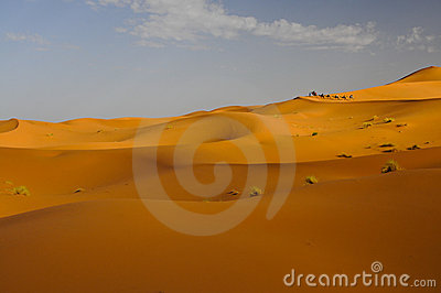 Camel caravan with tourists riding sand dunes