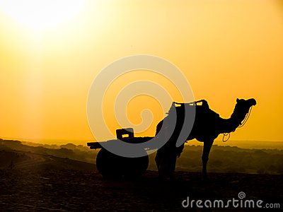 Camel and cart silhouette