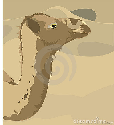 Camel and desert