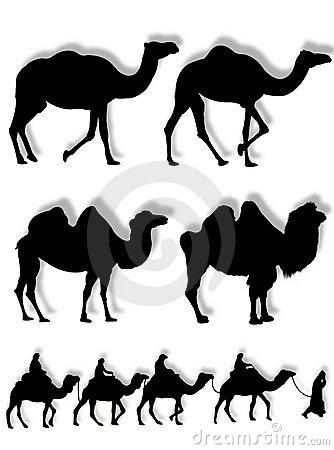 Camel and dromedary silhouettes