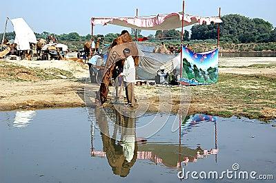 Camel fair at Vautha, india Editorial Stock Image