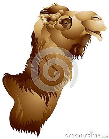 Free Camel Head Royalty Free Stock Photos - 18938708