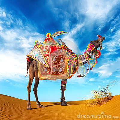 Free Camel In Desert Stock Images - 30718344