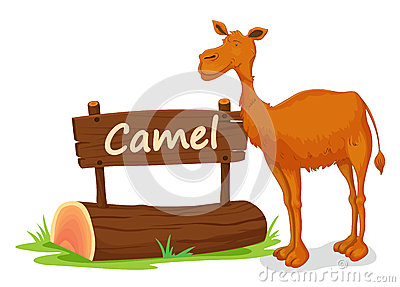 Camel and name plate