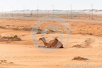 Camel with the newborn baby in the desert