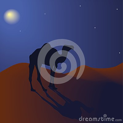 Camel at night