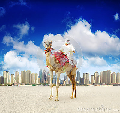 Free Camel On Dubai Marina Beach Stock Photos - 26162593