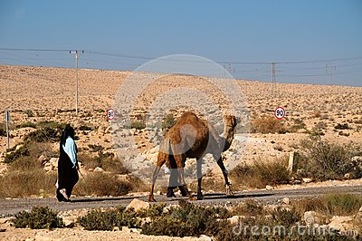 Camel  on parallel road