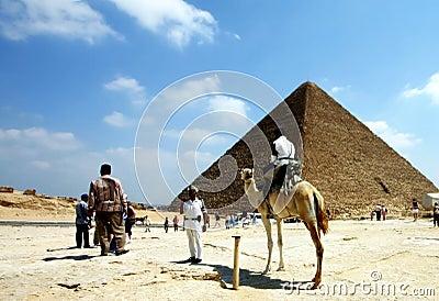 Camel and pyramid