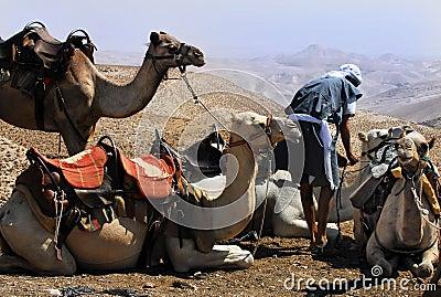 Camel ride  in the Judean Desert