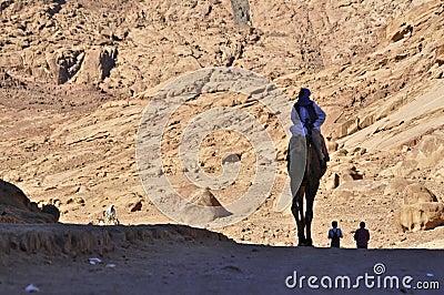 Camel  rider Editorial Stock Image