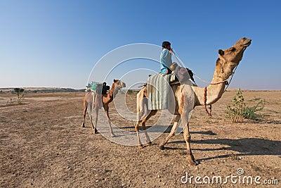 Camel rider Editorial Photo