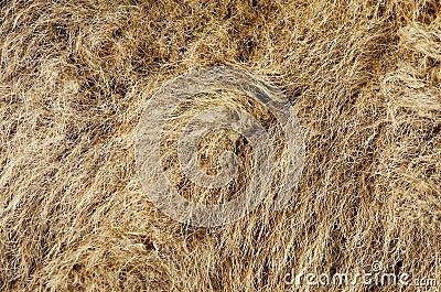 Camel s Hair