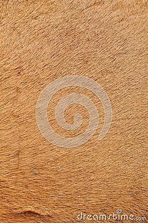 Camel s skin