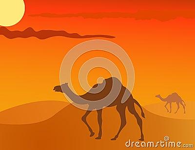 Camel in the savanna