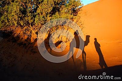 Camel shadows in a desert
