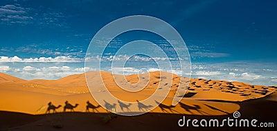 Camel shadows in the sahara