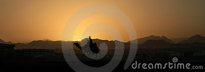 Camel at sunset in Sinai mountains