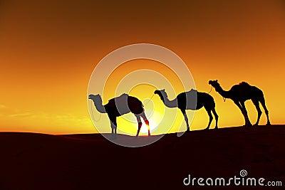 Camel train Silhouette.