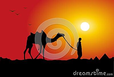Camel traveling