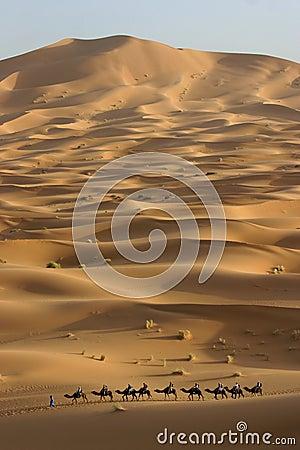 Camel trek across the Sahara