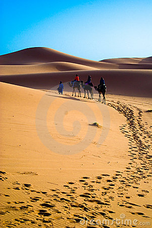 Free Camel Trekking Morocco Royalty Free Stock Images - 2385539