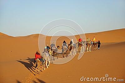 Camel trip in Sahara desert