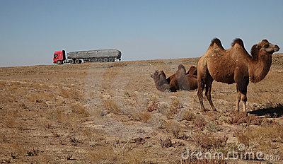 Camel and truck