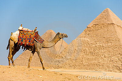 Camel Walking Pyramids