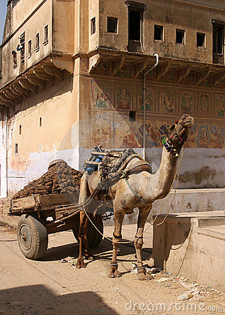 Free Camel With Cart Royalty Free Stock Image - 17710506