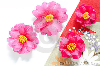 Camellia with cloth