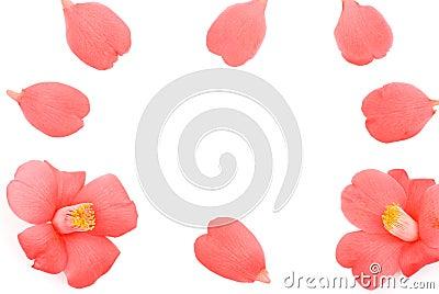 Camellia flower frame