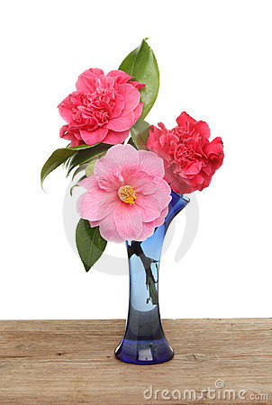 Camellia Flowers In A Vase Stock Photos Image 23721413
