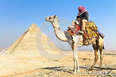 Camello en los pyramides de Giza, El Cairo, Egipto. Foto de archivo editorial