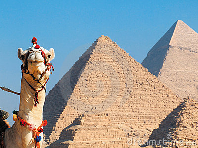 Camelo e pirâmides