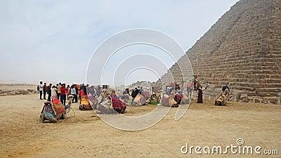 Camelos em Giza video estoque
