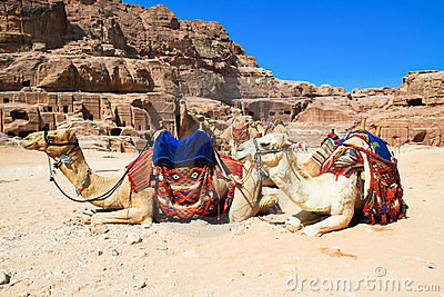 Camels in ancient city of Petra, Jordan