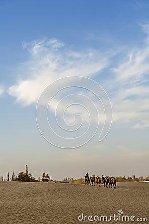 Camels back home