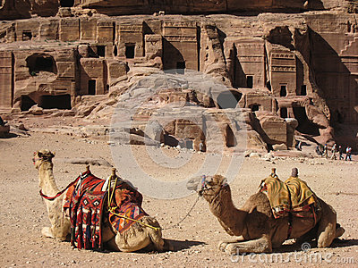 Camels at Petra. Jordan