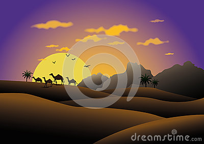 Camels in sunset desert