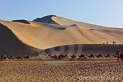 Camels team in desert Editorial Image