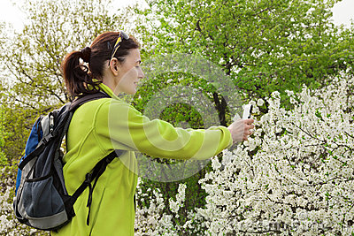 Caminante de la mujer que toma la foto de un árbol floreciente