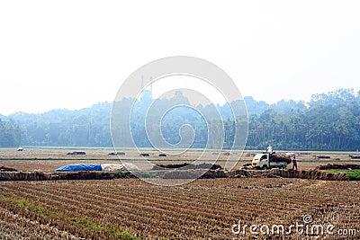 Caminhão carregado feno no meio do campo de almofada